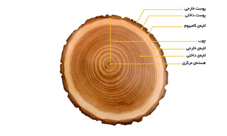 شناسایی ساختار چوب مجله نوین چوب