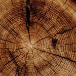 شناسایی ساختار و مواد اولیه تشکیلدهنده چوب مجله نوین چوب