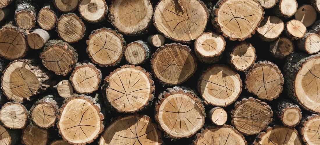 مقدمهای بر چوبشناسی و دامنه کاربرد چوب
