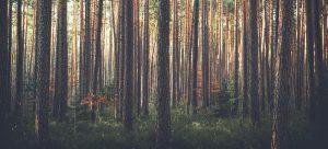 بررسی فرآیند بهرهبردای از چوب پیش از کارگاه - مجله نوین چوب